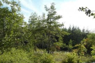Святогорский лес