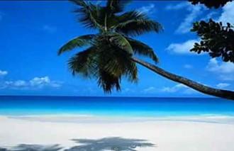 Тропический берег